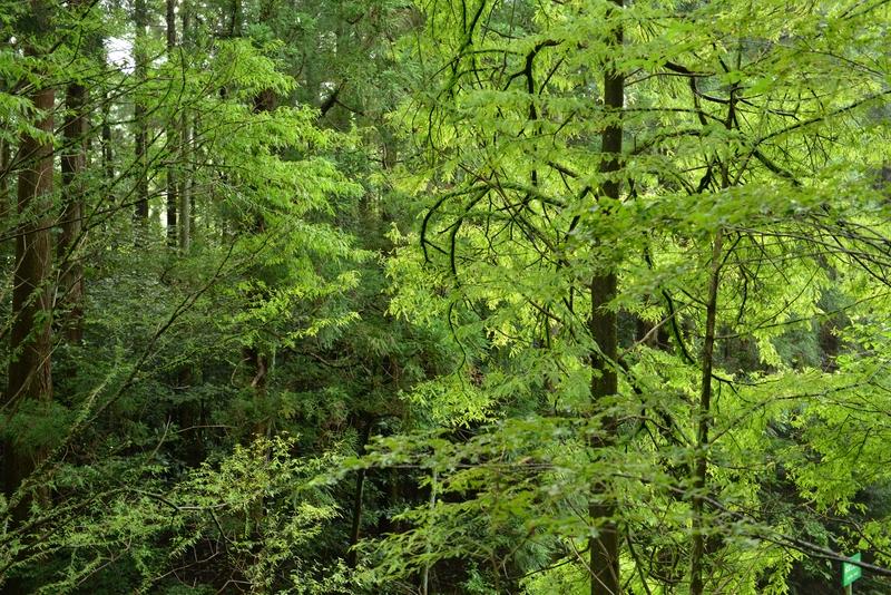 林 緑溢れる-1