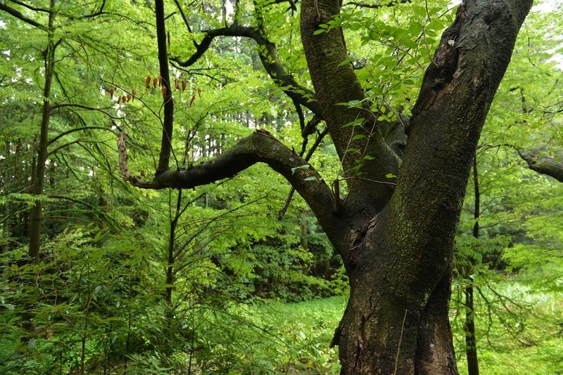 林 緑溢れる-2