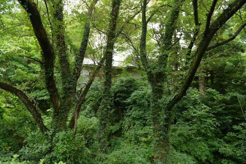 林 緑溢れる-3