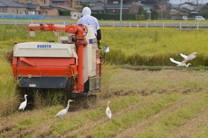 稲刈り-4