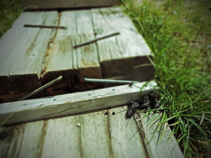 木道上の黒い落し物
