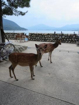奥のほうで、鹿たちの談会