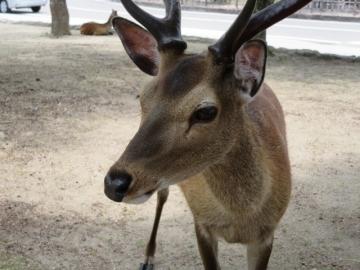 鹿が歓迎してくれる