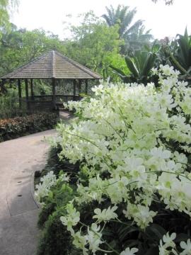 ・1000種類以上の蘭が集められてます