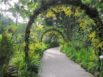 ・蘭の咲き乱れる園内、デンファレのアーチ