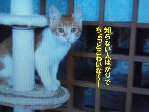 20140801-2.jpg