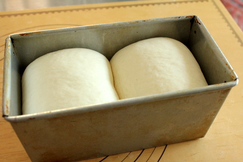 14.05.21生クリーム食パン_ホイロ終了