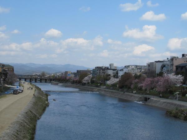 春爛漫の鴨川