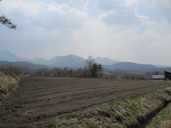 耕されたキャベツ畑