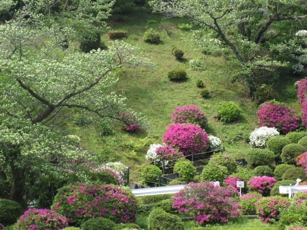 色とりどりの躑躅と花木