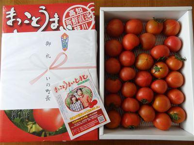 s-いの町 ミニトマト