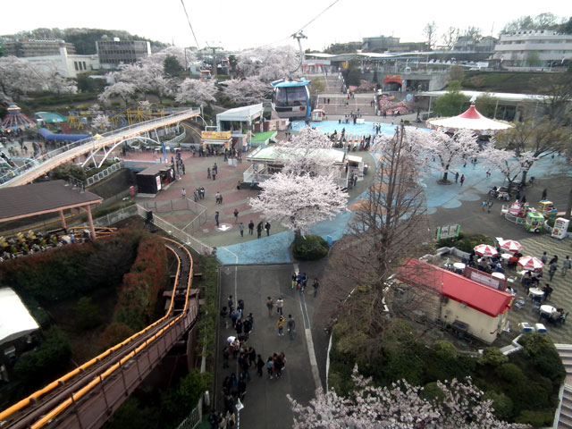 よみうりランドへのゴンドラから桜を眺める(3)