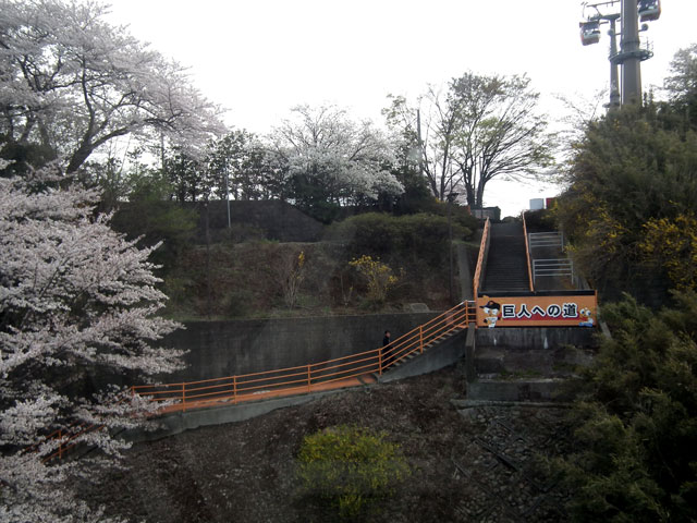 よみうりランドへのゴンドラから桜を眺める(4)