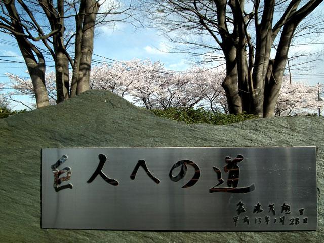 よみうりランド周辺の桜(5)