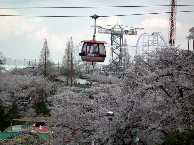 みうりランド周辺の桜(4)