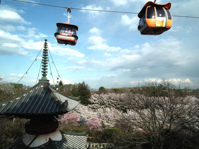 よみうりランド 聖地公園の桜(1)