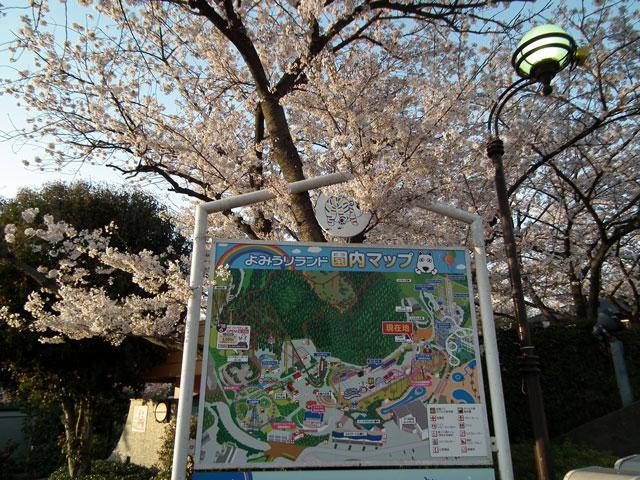 よみうりランド 桜と園内マップ