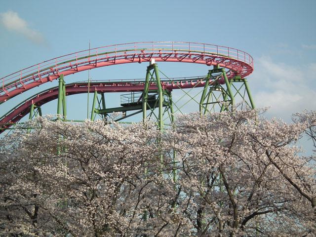 よみうりランド 桜とジェットコースター