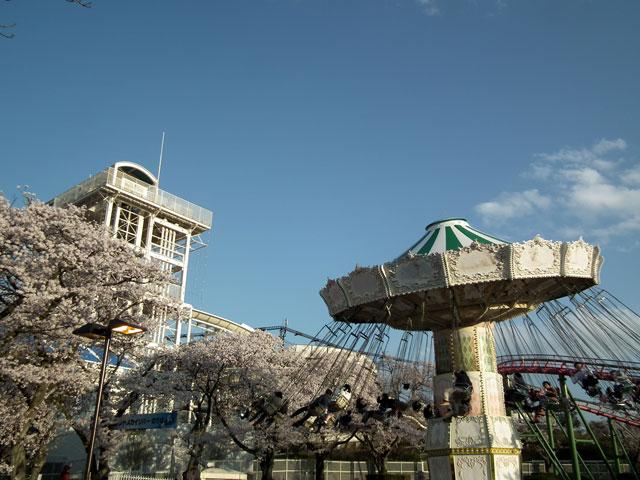 よみうりランド 桜と遊具