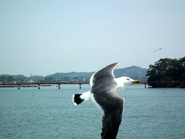 松島の風景(16)