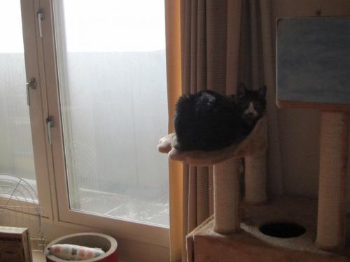 猫の足コロン2