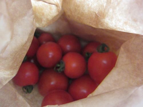 支援トマト