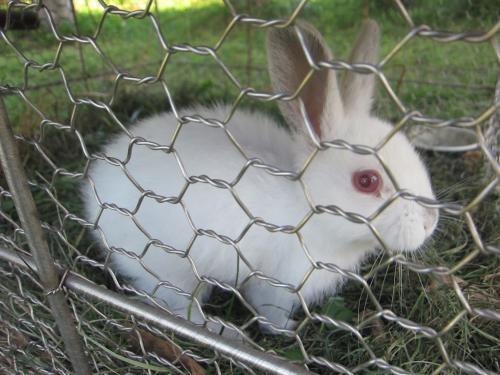 タカラ牧場のウサギ