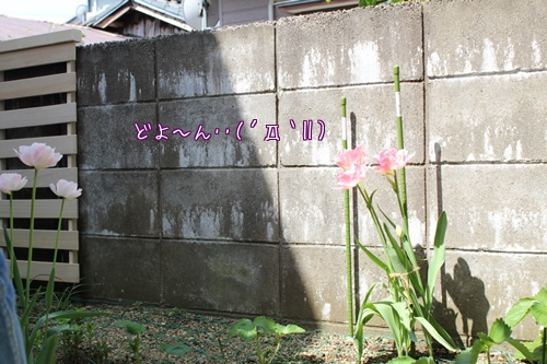 20140504-oniwa01.jpg