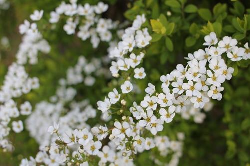 flower-201404015-2.jpg
