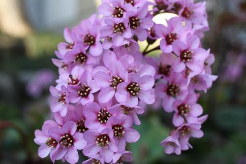 flower-201404015.jpg