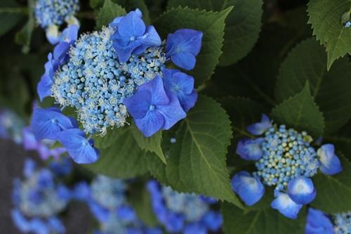 flower-20140701.jpg