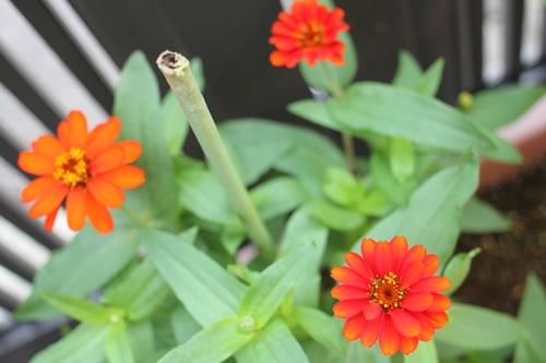flower-20140730.jpg