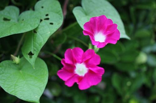 flower-20140809.jpg