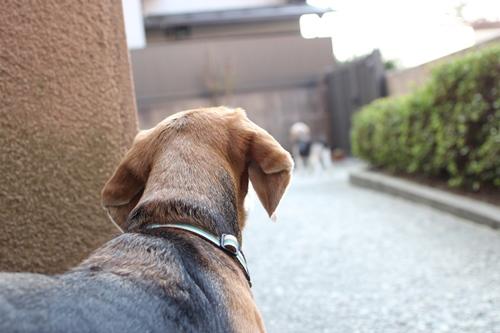 fritake-20140329-oniwa01.jpg