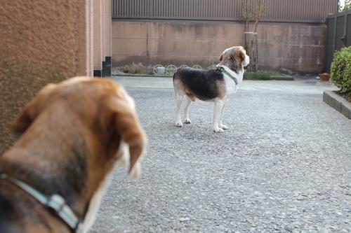 fritake-20140329-oniwa02.jpg