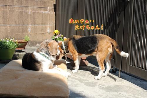 fritake-20140425-oniwa03.jpg