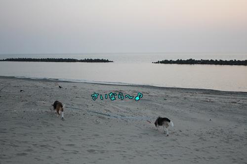 fritake-20140529-sea05.jpg