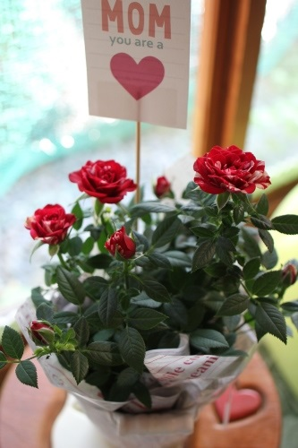 rose-20140511.jpg