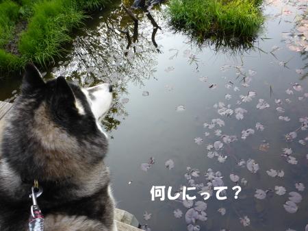 20140425_7.jpg