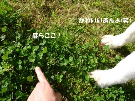 20140502_5.jpg