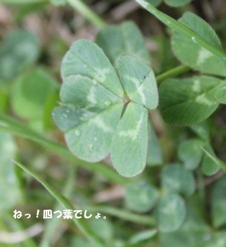20140502_7.jpg