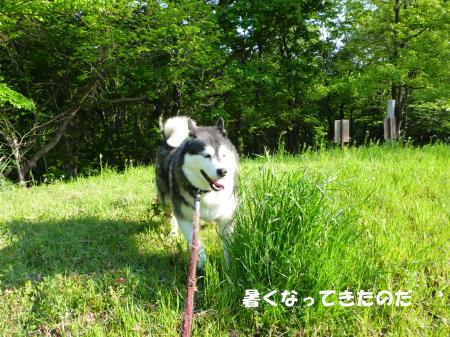 20140522_1.jpg
