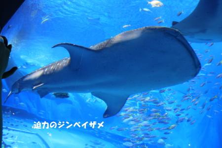 20140528_16.jpg