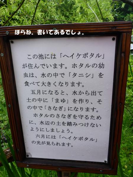 20140613_3.jpg