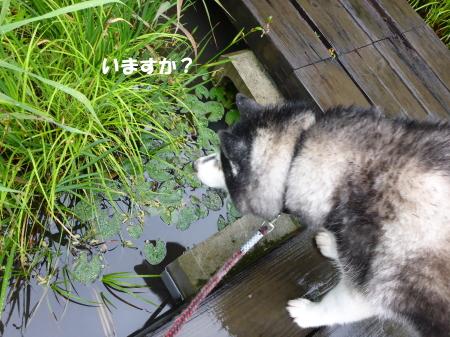 20140613_4.jpg