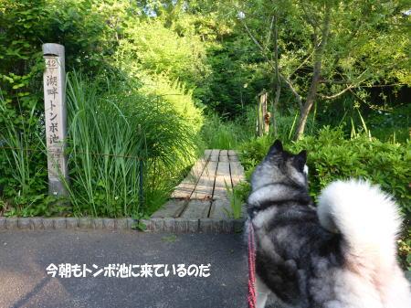 20140616_1.jpg