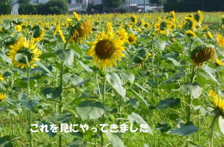20140727_4.jpg