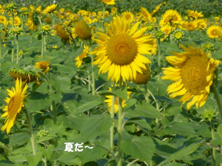 20140727_5.jpg