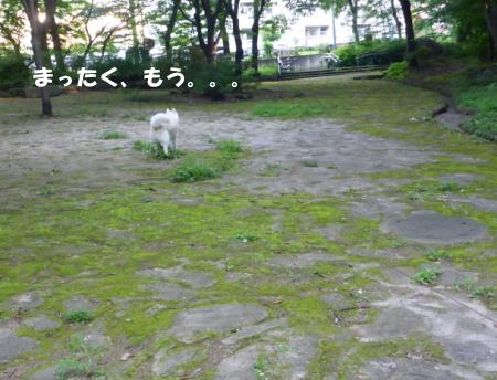 20140729_5.jpg