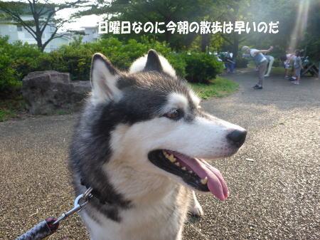 20140803_1.jpg